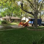 tree chipping in Houston