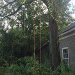 Houston tree pruning