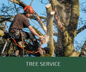 Tree Service | CVL Complete Tree Service