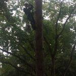 Houston tree climbing