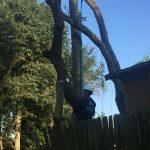 Houston tree topping