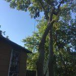 Houston Tx tree topping