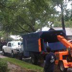 tree shredding